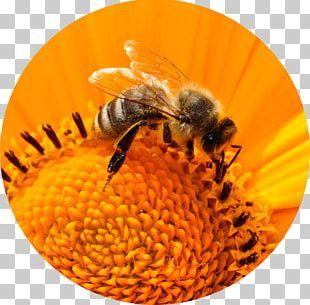Honey Bee Insect Bee Pollen PNG
