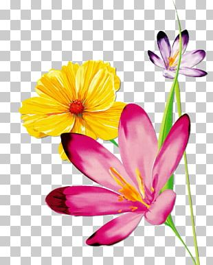Butterfly Flower Floral Design PNG