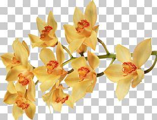 Moth Orchids Flower Color Desktop PNG