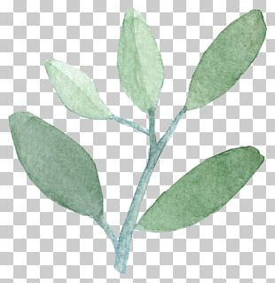 Watercolor Painting Leaf India Ink PNG