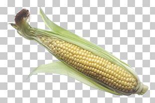 Corn On The Cob Maize Corncob Sweet Corn PNG