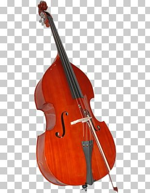 Double Bass Bass Guitar Viola Violin Family String Instruments PNG