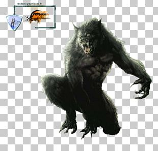 Werewolf Gray Wolf Drawing PNG
