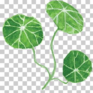 Leaf Nelumbo Nucifera Drawing PNG