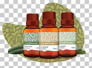 Essential Oil Eucalyptus Oil Gum Trees Aromata PNG
