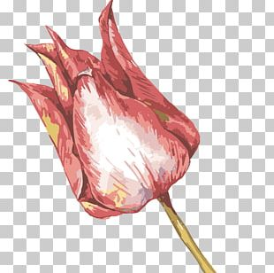 Watercolor Painting Oil Painting Illustration PNG