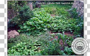 Tree Lotion Cream Vegetation Medicinal Plants PNG