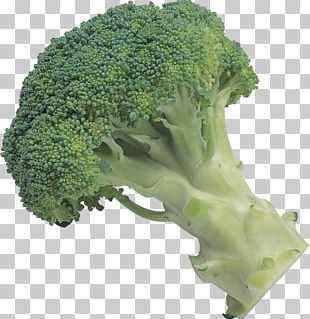 Broccoli PNG