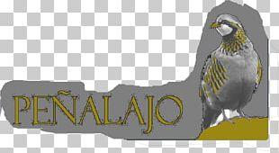Beak Bird Of Prey Fauna Graphics PNG