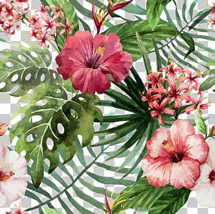 Shoeblackplant Flower Hawaiian Hibiscus Drawing PNG
