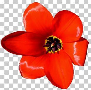 Flower Tulip Petal Microsoft PowerPoint Presentation PNG