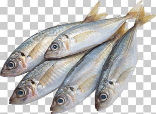 Fish Dots Per Inch PNG