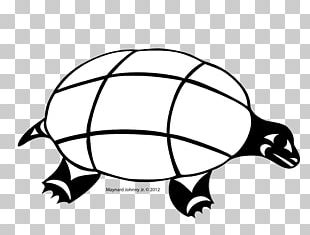 Tortoise Sea Turtle Gray Wolf Reptile PNG