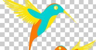 Water Bird Duck Goose PNG