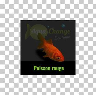 Shubunkin Comet Koi Feeder Fish PNG