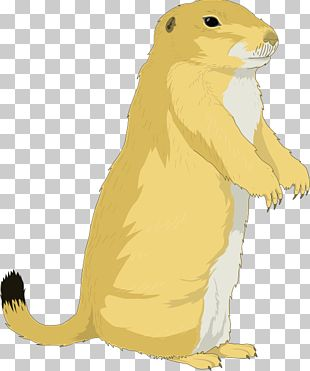 Groundhog Day Squirrel PNG