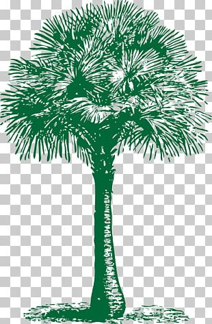 Arecaceae Asian Palmyra Palm Tree Washingtonia Filifera Date Palm PNG