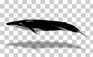 Dolphin Porpoise Cetacea Whale Watching Blue Whale PNG