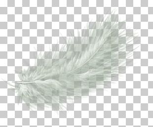 White Feather Drawing PNG