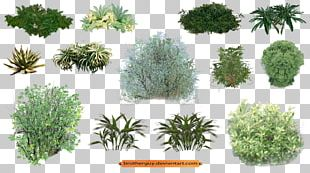 Plant Vegetation Shrub PNG