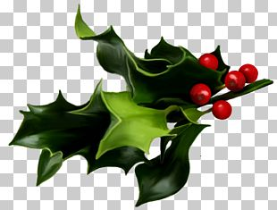 Common Holly Mistletoe Christmas PNG