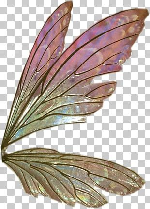 Wing Feather Sticker PNG