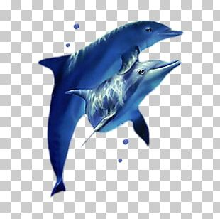 Oceanic Dolphin PNG