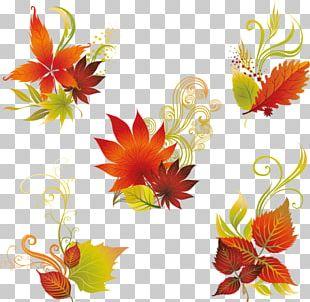 Floral Design Leaf PNG