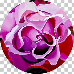 Garden Roses Cabbage Rose Cut Flowers Reticule Petal PNG