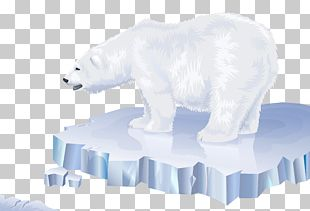 Polar Bear Arctic Polar Regions Of Earth PNG
