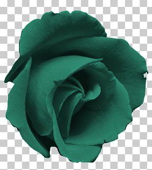 Blue Rose Pink Rose Garden PNG