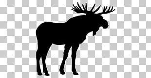 Moose Elk Deer PNG