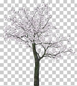 Tree Blossom Spring PNG