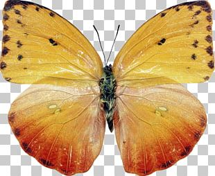 Butterfly Insect Moth Photography PNG