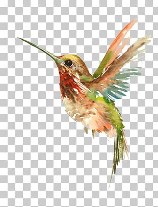 Hummingbird Watercolor Painting Tattoo PNG