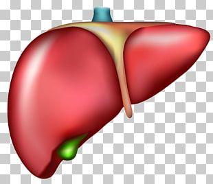Liver Organ Cirrhosis Drawing PNG