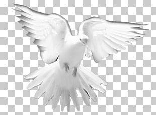 Holy Spirit Prayer Christian Church PNG