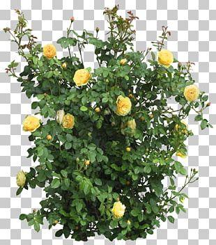 Shrub Tree Plant Flower PNG