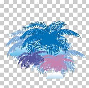 Arecaceae Coconut Tree PNG