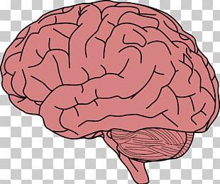 Human Brain Memory PNG