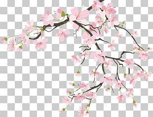 Flower Petal Cherry Blossom Floral Design Leaf PNG