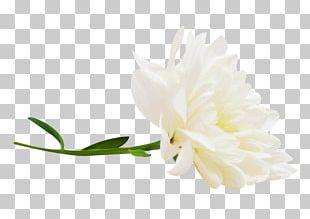 Petal Cut Flowers Plant Stem Flowering Plant PNG