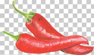 Bird's Eye Chili Piquillo Pepper Serrano Pepper Jalapeño Tabasco Pepper PNG