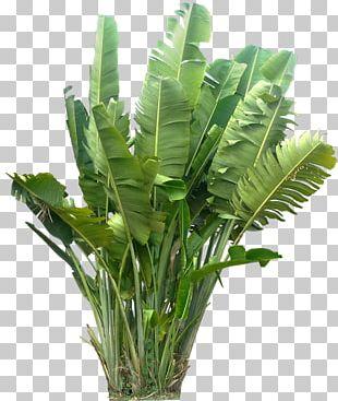 Plant Tropics PNG