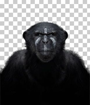 Common Chimpanzee Western Gorilla Primate Monkey In The Wild PNG