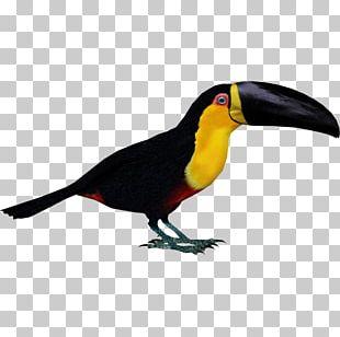 Zoo Tycoon 2 Bird Toucan Parrot Woodpecker PNG