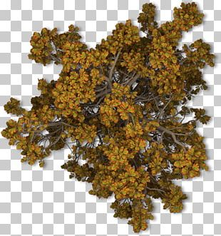 Tree Autumn Leaf Shrub PNG