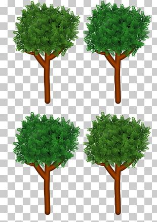 Branch Tree Forest PNG