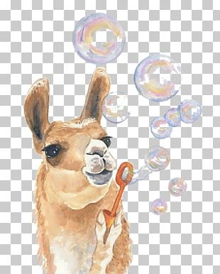 Llama Watercolor Painting Drawing Art PNG