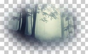 Cloud Forest Mist Fog Haze PNG